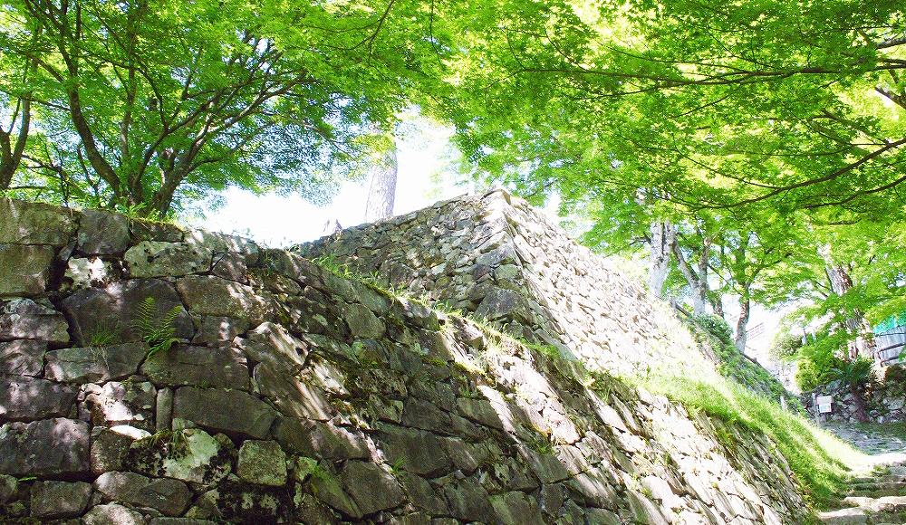 新緑と八幡城の石垣