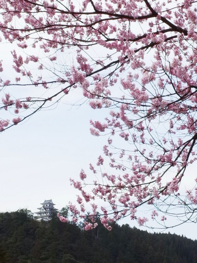 愛宕桜と城